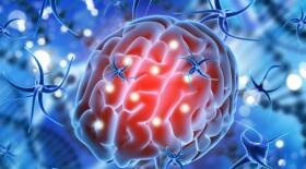 Из-за COVID-19 может уменьшаться объем серого вещества головного мозга
